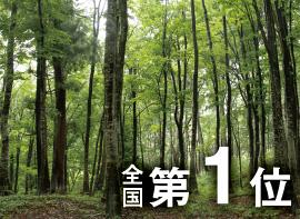 長野県の森林の写真